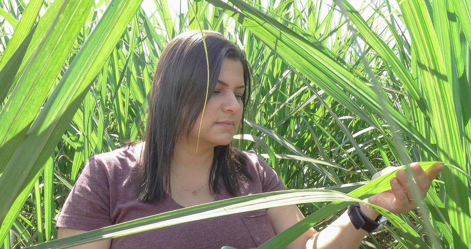 Rejane Souza