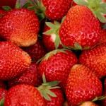 Frugt & Bær
