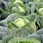 Frilandsgrøntsager