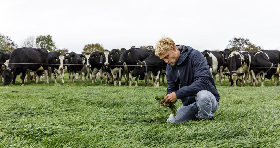 Improving nitrogen use efficiency on livestock farms
